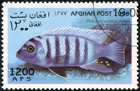 AFGHANISTAN - CIRCA 1998  A stamp printed in Afghanistan showing Zebra Cichlid, circa 1998