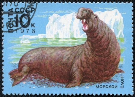 USSR - CIRCA 1978  A stamp printed in USSR shows a sea elephant, circa 1978