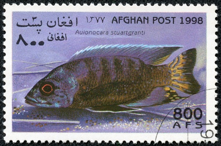 aulonocara: AFGHANISTAN - CIRCA 1998  A stamp printed in Afghanistan showing Flavescent Peacock, circa 1998