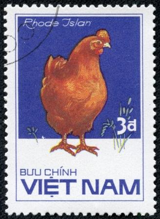 red hen: VIETNAM - CIRCA 1985  A stamp printed in VIETNAM shows Rhode Island Red hen, from series Chicken Breeds, circa 1985