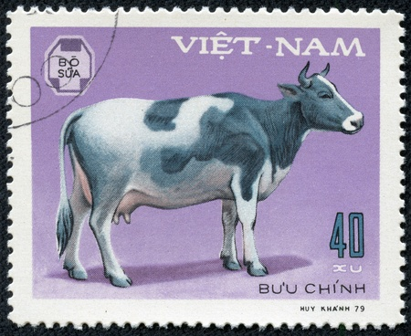 VIETNAM - CIRCA 1979  A stamp printed in Vietnam shows cow, series devoted to pet, circa 1979