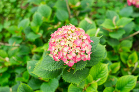 flower in garden Stock Photo - 19620963