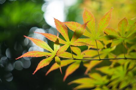 colorful leaves close up