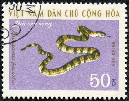 VIETNAM - CIRCA 1970s  A post stamp printed in Vietnam shows snake , series  circa 1970s