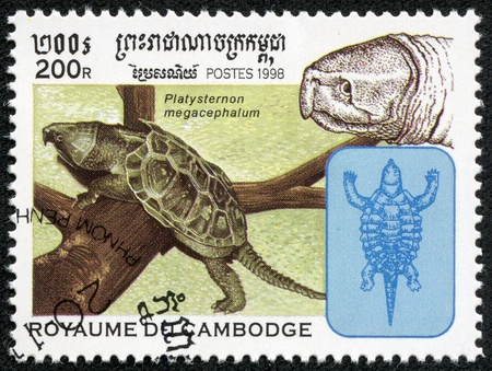 CAMBODIA - CIRCA 1998  A stamp printed in Cambodia shows a big-headed Turtle, Platysternon megacephalum, whose head is too big to fit into its shell, circa 1998  photo