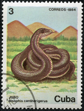CUBA - CIRCA 1984  stamp printed by Cuba, shows cobra, snake, serpent circa 1984 photo