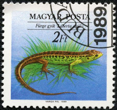 lizard in field: Hungría - CIRCA 1989 Un sello impreso en Hungría muestra Sand Lizard Lacerta agilis, con las mismas inscripciones, desde el peligro Reptiles serie, alrededor de 1989
