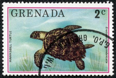 cooter: GRENADA - CIRCA 1976  A stamp printed in Grenada shows Hawksbill turtle - Eretmochelys imbricata, circa 1976 Stock Photo