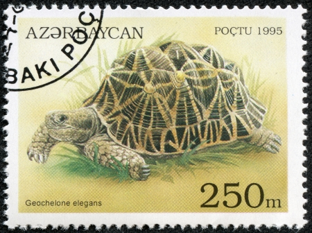 philatelic: AZERBAIJAN - CIRCA 1995  A stamp printed in Azerbaijan shows an Indian Star Tortoise, Geochelone elegans which is found in India and Sri Lanka, circa 1995