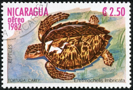 hunted: NICARAGUA - CIRCA 1982  A stamp printed in Nicaragua shows a Hawksbill Sea Turtle Eretmochelys imbricata, the primary source of  tortoise shell  material, hunted nearly to extinction, circa 1982  Stock Photo