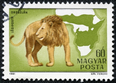 philately: HUNGARY - CIRCA 1981  stamp printed by Hungary, shows lion, Africa, wildcats circa 1981