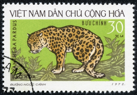panthera pardus: NORTH VIETNAM - CIRCA 1972  A stamp printed in North Vietnam shows the leopard, Panthera pardus, on a tree branch, circa 1972