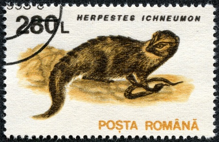 postman of the desert: ROMANIA - CIRCA 1993  A stamp printed in the Romania, shows the Egyptian Mongoose  Herpestes ichneumon , circa 1993