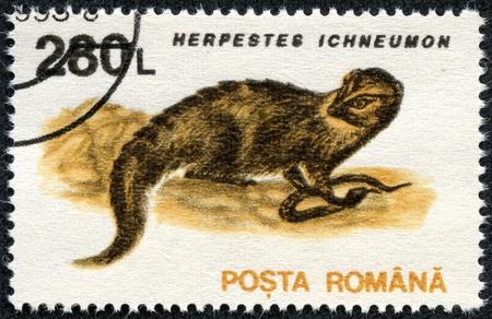postman of the desert: ROMANIA - CIRCA 1993  A stamp printed in the Romania, shows the Egyptian Mongoose  Herpestes ichneumon , circa 1993