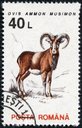 mouflon: ROMANIA - CIRCA 1993  A stamp printed in the Romania, shows the Mouflon  Ovis ammon musimon , circa 1993 Stock Photo