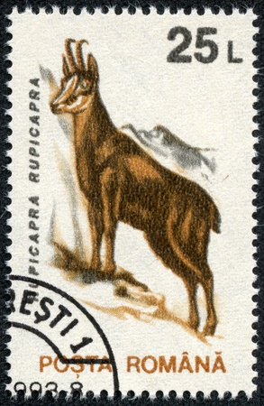 ROMANIA - CIRCA 1993  A stamp printed in Romania shows Chamois  Rupicapra rupicapra , with the same inscription, from the series  Animals  , circa 1993 photo