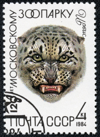 irbis: USSR - CIRCA 1984  A stamp printed in USSR  Russia  shows a Snow leopard, with the inscription  Irbis  from the series  120th Anniversary of Moscow Zoo , circa 1984 Stock Photo
