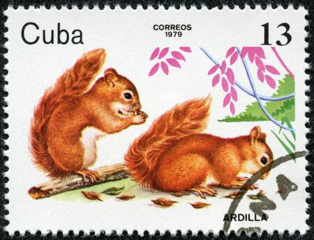 eurasian: CUBA - CIRCA 1979  The postal stamp printed in CUBA shows Two young Animals with the inscription  Eurasian red squirrels , series animals, circa 1979 Stock Photo