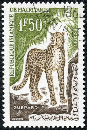 MAURITANIA - CIRCA 1963  A stamp printed in Mauritania from the  Animals  issue shows a cheetah, circa 1963  photo