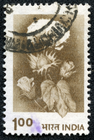 indian postal stamp: INDIA - CIRCA 1979  A stamp printed in India shows Hybrid cotton, without inscription, from the series  Crops and Farming , circa 1979