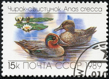 eurasian: USSR- CIRCA 1989  A stamp printed in the USSR shows the Eurasian or Common Teal, Anas crecca, floating on a lake, circa 1989