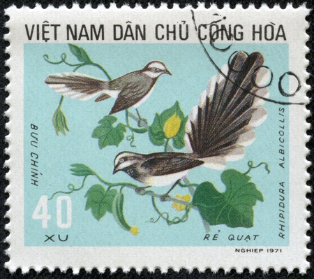 fantail: VIETNAM - CIRCA 1971  stamp printed by Vietnam, shows bird, White-throated Fantail circa 1971 Stock Photo