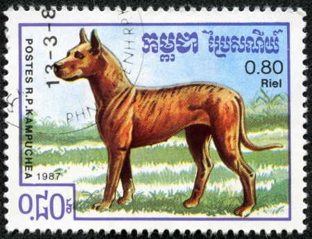 CAMBODIA- CIRCA 1987  stamp printed by Cambodia, shows German Great Dane dog circa 1987 Stock Photo - 23105699