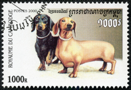 CAMBODIA - CIRCA 2000  stamp printed by Cambodia, shows dog, circa 2000 Stock Photo - 23105704