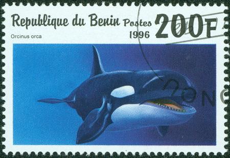 ballena azul: BENIN - CIRCA 1996 Un sello impreso en Benin muestra Orcinus orca, alrededor de 1996