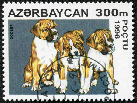 philatelic: AZERBAIJAN - CIRCA 1996  mail stamp printed in Azerbaijan featuring a litter of pedigree Boxer dog puppies, circa 1996