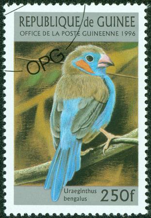 guinee: GUINEE - CIRCA 1996  stamp printed by GUINEE, shows bird uraeginthus bengalus , circa 1996  Stock Photo