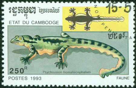 commemorative: CAMBODIA - CIRCA 1993  A stamp printed in Cambodia shows Kuhl s Flying Gecko, Ptychozoon Kuhli, formerly Ptychozoon homalocephalum  Has flaps of skin to glide for short distances, circa 1993