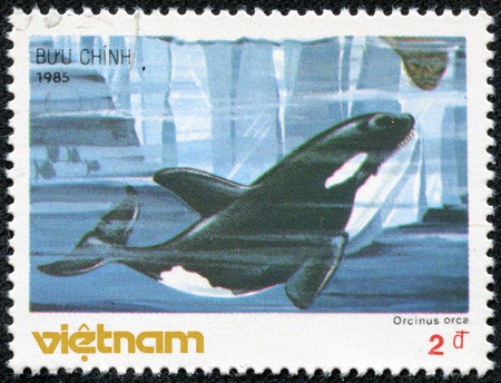 VIETNAM - CIRCA 1985  A stamp printed in Vietnam shows Killer whale - Orcinus orca, circa 1985 Stock Photo - 23413187