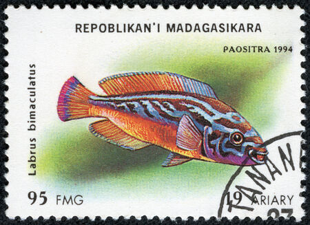 ichthyology: MADAGASCAR - CIRCA 1994  stamp printed in Madagascar dedicated to fish shows labrus bimaculatus, circa 1994