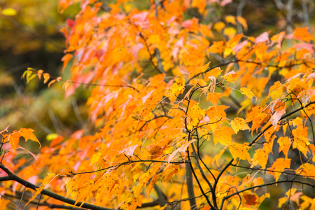 bloodgood: Autumnal colored leaves Stock Photo