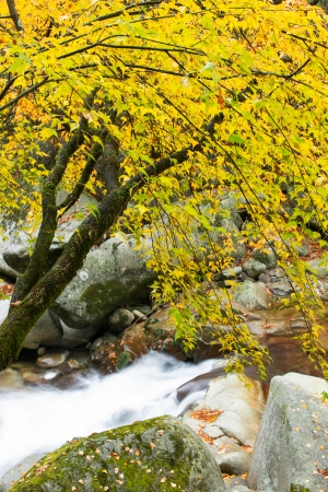 autumn,forest and stream,guang wu shan  photo