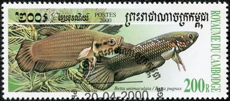 CAMBODIA - CIRCA 2000  A stamp printed in CAMBODIA shows fish, circa 2000 Stock Photo - 23851966