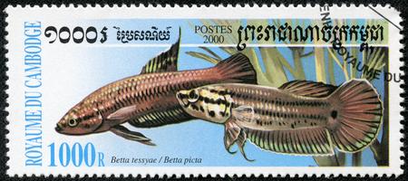 CAMBODIA - CIRCA 2000  A stamp printed in CAMBODIA shows fish, circa 2000 Stock Photo - 23867126