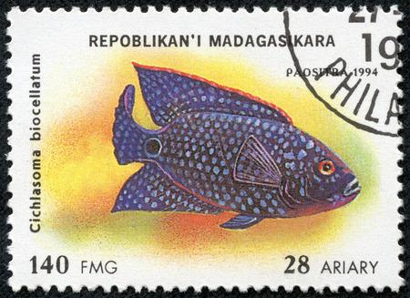 cichlasoma: MADAGASCAR - CIRCA 1994  stamp printed in Madagascar dedicated to fish shows cichlasoma biocellatum, circa 1994