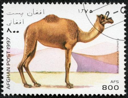 camel post: AFGHANISTAN - CIRCA 1997  A stamp printed in Afghanistan shows camel, camelus dromedarius, circa 1997