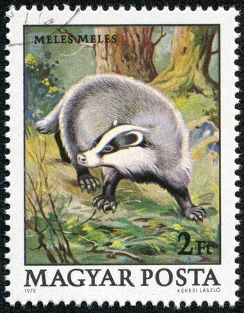magyar: HUNGARY - CIRCA 1979  A stamp printed in Hungary shows image of Meles circa 1979  Stock Photo