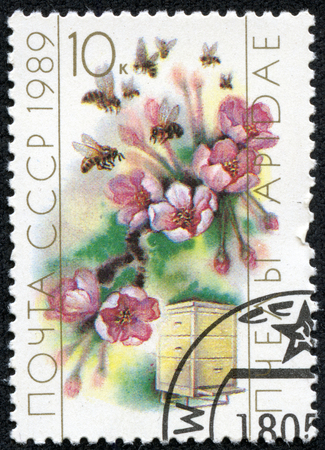 collecting: USSR- CIRCA 1989  A stamp printed in the USSR shows worker bee collecting pollen, circa 1989
