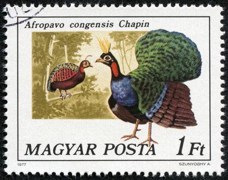philatelic: HUNGARY - CIRCA 1977  A stamp printed in Hungary shows Congo peacock  Afropavo congensis Chapin , series Birds, circa 1977