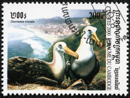 CAMBODIA - CIRCA 2000  A stamp printed in Cambodia showing albatross diomedea irrorata , circa 2000 photo