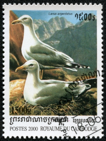CAMBODIA - CIRCA 2000  A stamp printed in Cambodia showing gull larus argentatus , circa 2000 photo