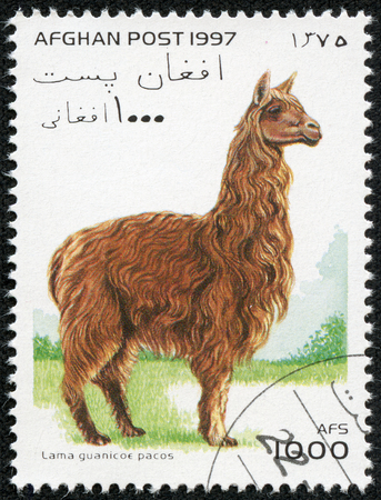 AFGHANISTAN - CIRCA 1998  A stamp printed in Afghanistan shows lama guanicoe pacos, circa 1998