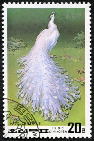 pavo: NORTH KOREA - CIRCA 1990  A stamp printed in DPR Korea shows peacock pavo cristatus , circa 1990
