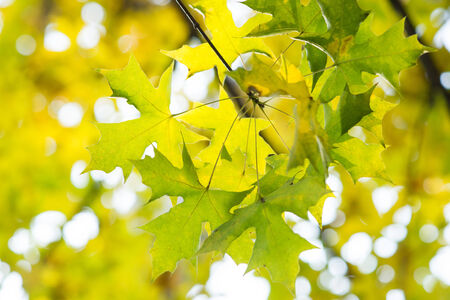 Autumnal colored leaves Stock Photo