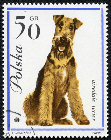 airedale: POLAND - CIRCA 1963  A stamp printed in Poland shows Airedale terrier dog, circa 1963  Editorial