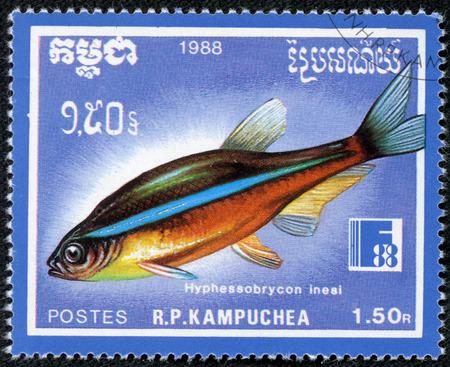 hyphessobrycon: CAMBODIA - CIRCA 1988  A stamp printed Cambodia shows fish hyphessobrycon inesi , circa 1988